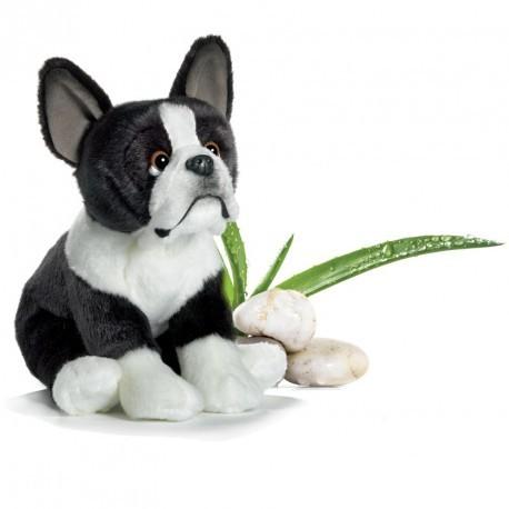 bulldog-francais