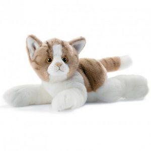 chat-roux-blanc